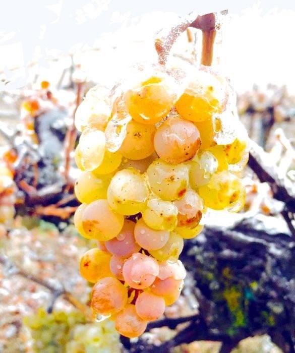 Виноград во льду