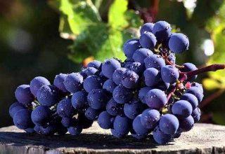 cabernet sauvignon e1605601179634 320x220 - Закончился сезон сбора урожая 2020